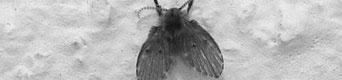 vaposect-motmuggen